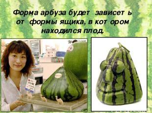 Форма арбуза будет зависеть от формы ящика, в котором находился плод.