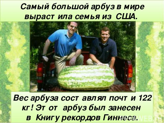 Самый большой арбуз в мире вырастила семья из США. Вес арбуза составлял почти 122 кг! Этот арбуз был занесен в Книгу рекордов Гиннеса.