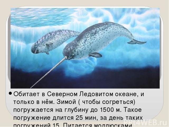 Обитает в Северном Ледовитом океане, и только в нём. Зимой ( чтобы согреться) погружается на глубину до 1500 м. Такое погружение длится 25 мин, за день таких погружений 15. Питается моллюсками, рачками, рыбой. У нарвала всего 2 зуба, один не растёт …