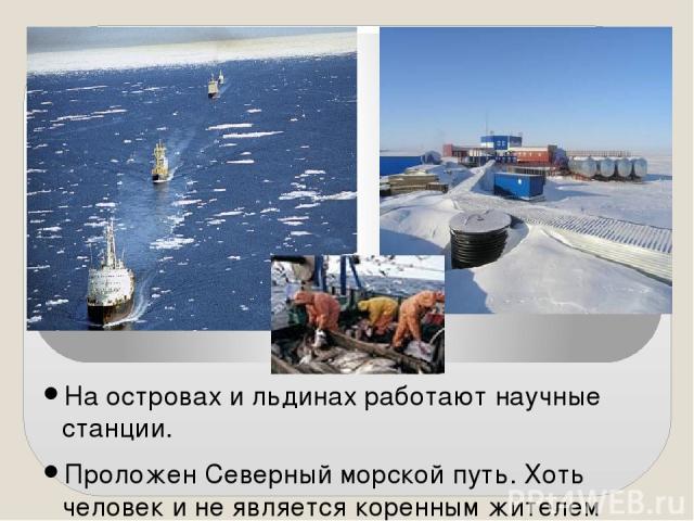 На островах и льдинах работают научные станции. Проложен Северный морской путь. Хоть человек и не является коренным жителем Арктики, но в морях Северного Ледовитого океана люди занимаются рыболовством, охотой.