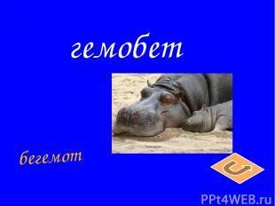 гемобет бегемот