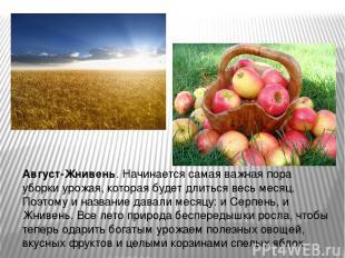 Август-Жнивень. Начинается самая важная пора уборки урожая, которая будет длитьс