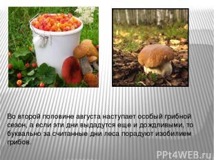Во второй половине августа наступает особый грибной сезон, а если эти дни выдаду