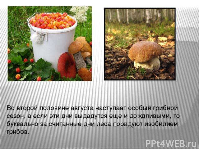 Во второй половине августа наступает особый грибной сезон, а если эти дни выдадутся еще и дождливыми, то буквально за считанные дни леса порадуют изобилием грибов.