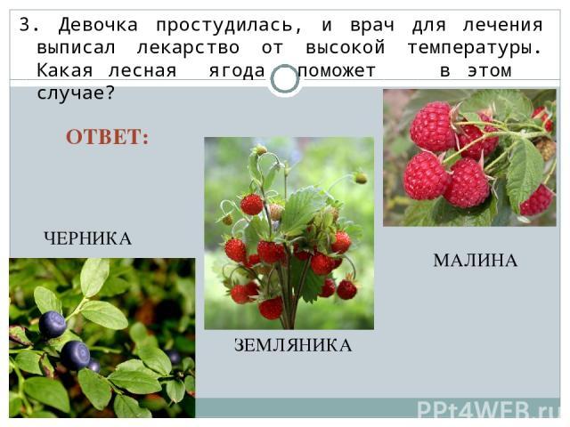 3. Девочка простудилась, и врач для лечения выписал лекарство от высокой температуры. Какая лесная ягода поможет в этом случае? ЧЕРНИКА ЗЕМЛЯНИКА МАЛИНА ОТВЕТ: