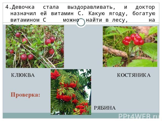 4.Девочка стала выздоравливать, и доктор назначил ей витамин С. Какую ягоду, богатую витамином С можно найти в лесу, на болоте? КОСТЯНИКА РЯБИНА КЛЮКВА Проверка: