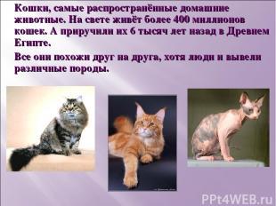 Кошки, самые распространённые домашние животные. На свете живёт более 400 миллио