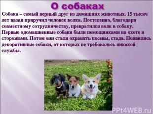 Собака – самый верный друг из домашних животных. 15 тысяч лет назад приручил чел