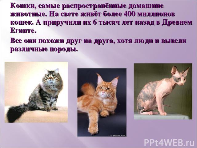Кошки, самые распространённые домашние животные. На свете живёт более 400 миллионов кошек. А приручили их 6 тысяч лет назад в Древнем Египте. Все они похожи друг на друга, хотя люди и вывели различные породы.