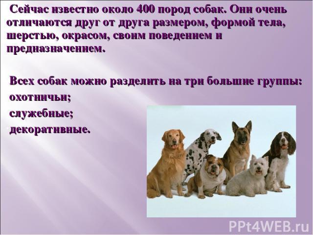 Сейчас известно около 400 пород собак. Они очень отличаются друг от друга размером, формой тела, шерстью, окрасом, своим поведением и предназначением. Всех собак можно разделить на три большие группы: охотничьи; служебные; декоративные.