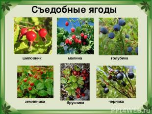 Съедобные ягоды шиповник голубика земляника черника брусника малина