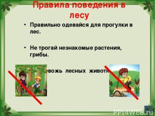 Правила поведения в лесу Правильно одевайся для прогулки в лес. Не трогай незнак