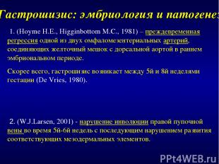 Гастрошизис: эмбриология и патогенез 1. (Hoyme H.E., Higginbottom M.C., 1981) –