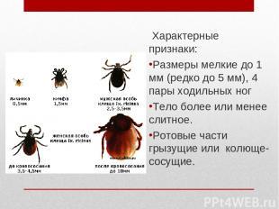 Царство: Животные Тип: Членистоногие Подтип: Хелицеровые Класс: Паукообразные От