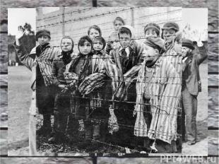 Нацистские евгенические программы Программа эвтаназии Т-4 Уничтожение гомосексуа