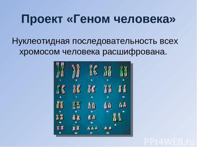 Проект «Геном человека» Нуклеотидная последовательность всех хромосом человека расшифрована.