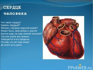 СЕРДЦЕ человека Что такое сердце? Камень твердый? Яблоко с багрово-красной кожей