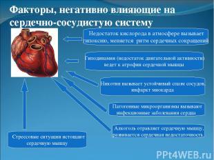Гиподинамия (недостаток двигательной активности) ведет к атрофии сердечной мышцы