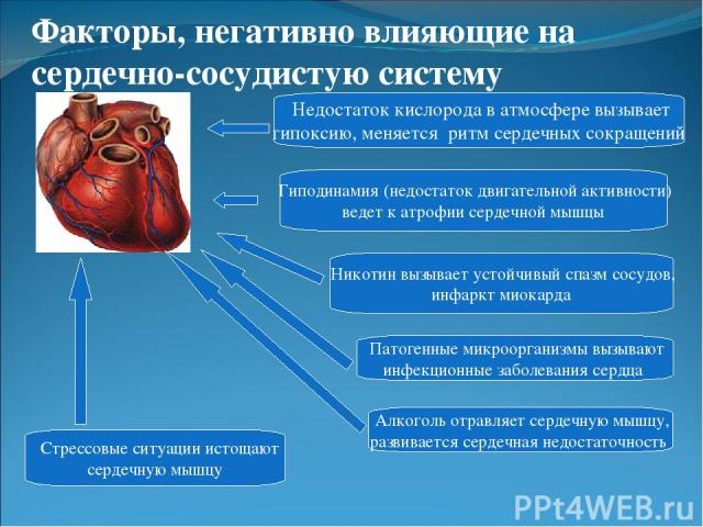 Гиподинамия (недостаток двигательной активности) ведет к атрофии сердечной мышцы Алкоголь отравляет сердечную мышцу, развивается сердечная недостаточность Никотин вызывает устойчивый спазм сосудов, инфаркт миокарда Патогенные микроорганизмы вызывают…