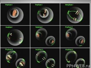 После детерминации клеток, т. е. после окончательного формирования эпигенома, на