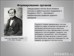 Формирование органов Христиан Иванович Пандер (1794-1865, Россия) Сущность теори