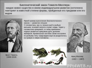 Биогенетический закон Геккеля-Мюллера : каждое живое существо в своем индивидуал