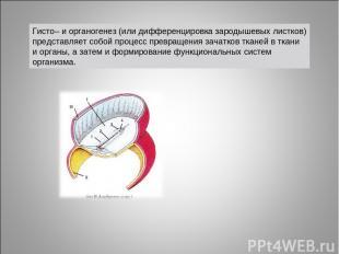 Гисто– и органогенез (или дифференцировка зародышевых листков) представляет собо