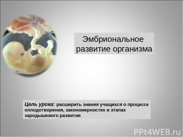 Цель урока: расширить знания учащихся о процессе оплодотворения, закономерностях и этапах зародышевого развития Эмбриональное развитие организма