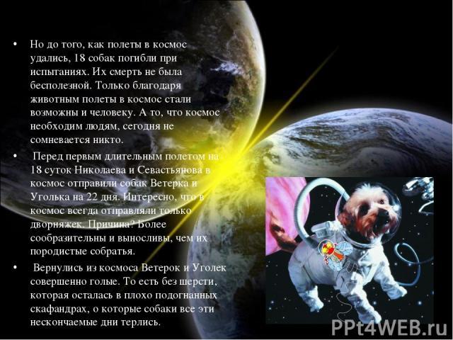 Но до того, как полеты в космос удались, 18 собак погибли при испытаниях. Их смерть не была бесполезной. Только благодаря животным полеты в космос стали возможны и человеку. А то, что космос необходим людям, сегодня не сомневается никто. Перед первы…