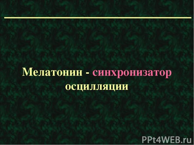 Мелатонин - синхронизатор осцилляции