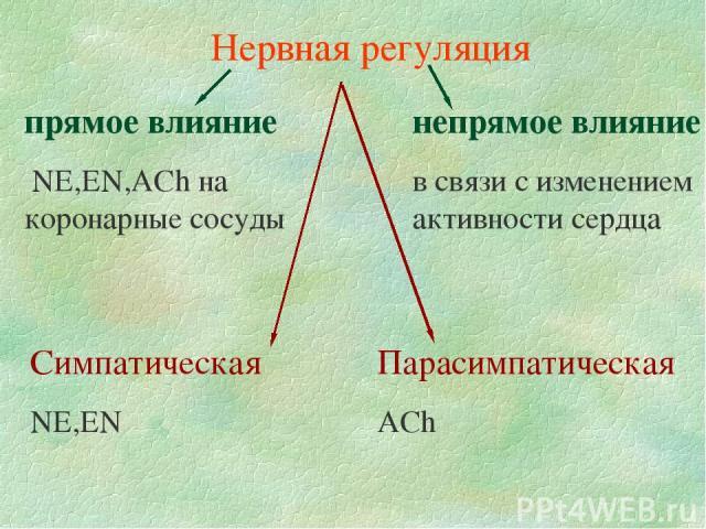 Нервная регуляция прямое влияние NE,EN,AСh на коронарные сосуды непрямое влияние в связи с изменением активности сердца Симпатическая NE,EN Парасимпатическая AСh