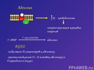 Аденозин G A1 гиперполяризация корковых нейронов PGD2 -модуляция А1-рецепторов к