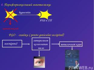 PGO - спайки ( ponto-genicular-occipital) латеральное коленчатое тело затылочная