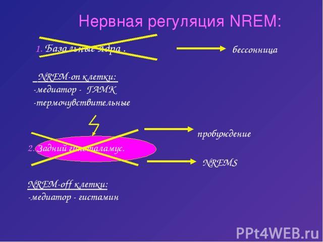 Нервная регуляция NREM: 1. Базальные ядра . NREM-on клетки: -медиатор - ГАМК -термочувствительные бессонница 2. Задний гипоталамус. NREM-off клетки: -медиатор - гистамин пробуждение NREMS