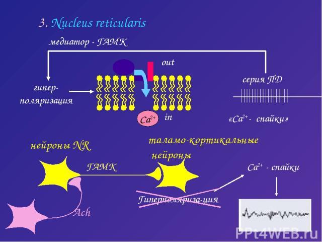 3. Nucleus reticularis медиатор - ГАМК Са2+ Са2+ - спайки in out