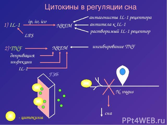 Цитокины в регуляции сна 1) IL-1 NREM LPS 2) TNF NREM