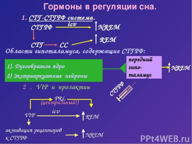 передний гипо- таламус Гормоны в регуляции сна. 1. СТГ-СТГРФ система. СТГРФ Области гипоталамуса, содержащие СТГРФ: 1). Дугообразное ядро 2) Экстрааркуатные нейроны СТГРФ PRL (центральный!)