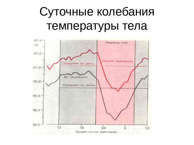 Суточные колебания температуры тела