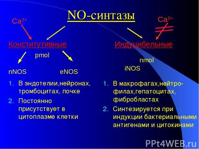 NO-синтазы Конститутивные Индуцибельные nNOS eNOS В эндотелии,нейронах, тромбоцитах, почке Постоянно присутствует в цитоплазме клетки В макрофагах,нейтро-филах,гепатоцитах, фибробластах Синтезируется при индукции бактериальными антигенами и цитокина…