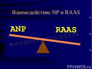 Взаимодействие NP и RAAS