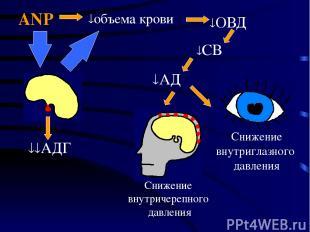 Снижение внутричерепного давления Снижение внутриглазного давления ANP АД объема