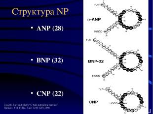 "Структура NP ANP (28) BNP (32) CNP (22) Craig S. Barr and others ""C-type natriur"