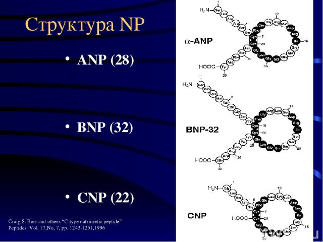 "Структура NP ANP (28) BNP (32) CNP (22) Craig S. Barr and others ""C-type natriuretic peptide"" Peptides Vol. 17,No, 7, pp. 1243-1251,1996"