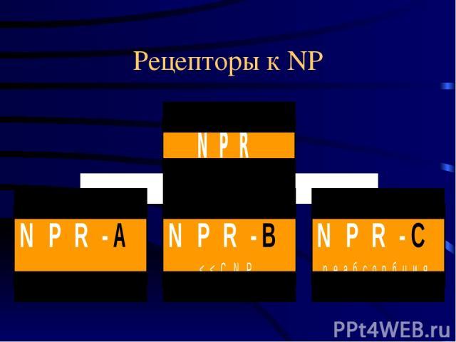 Рецепторы к NP