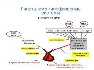 Гипоталамо-гипофизарные системы