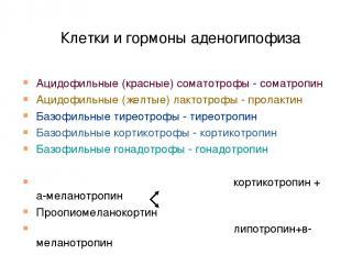 Клетки и гормоны аденогипофиза Ацидофильные (красные) соматотрофы - соматропин А