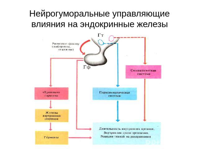Нейрогуморальные управляющие влияния на эндокринные железы