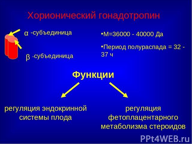 Функции М=36000 - 40000 Да Период полураспада = 32 - 37 ч Хорионический гонадотропин регуляция эндокринной системы плода регуляция фетоплацентарного метаболизма стероидов
