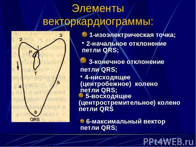 Элементы векторкардиограммы: 1-изоэлектрическая точка; 2-начальное отклонение петли QRS; 3-конечное отклонение петли QRS; 4-нисходящее (центробежное) колено петли QRS; 5-восходящее (центростремительное) колено петли QRS 6-максимальный вектор петли QRS;