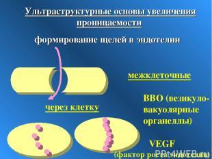 Ультраструктурные основы увеличения проницаемости формирование щелей в эндотелии